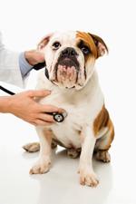 veterinary services in okc